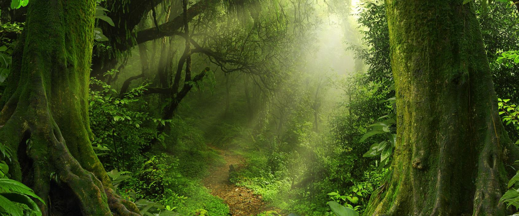 Fühlen Sie sich verloren im Steuer-Dschungel?